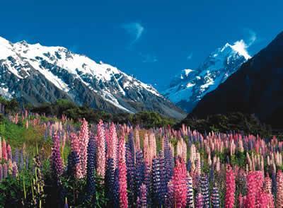Amazing New Zealand - Telephone